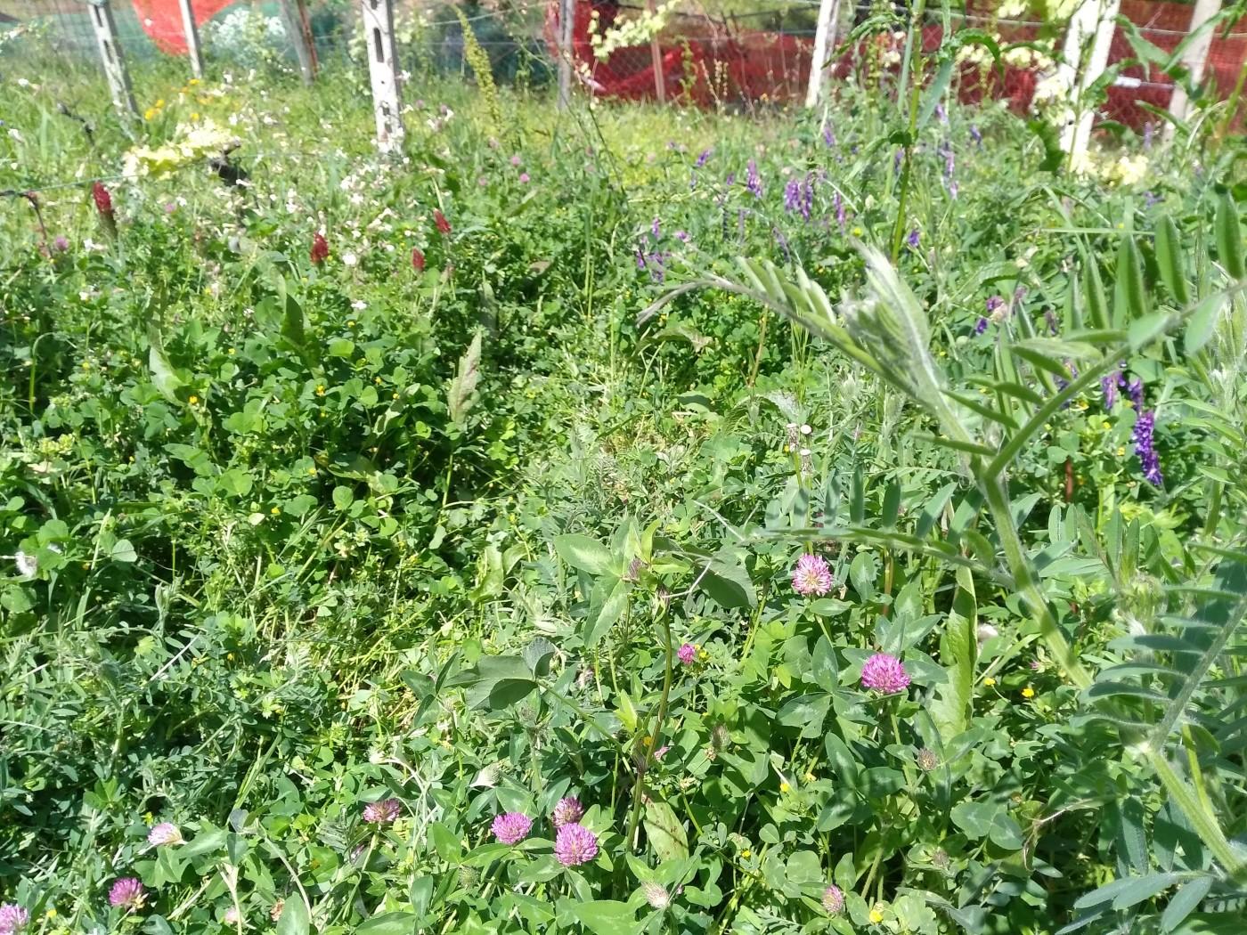 L'importanza delle erbe spontanee